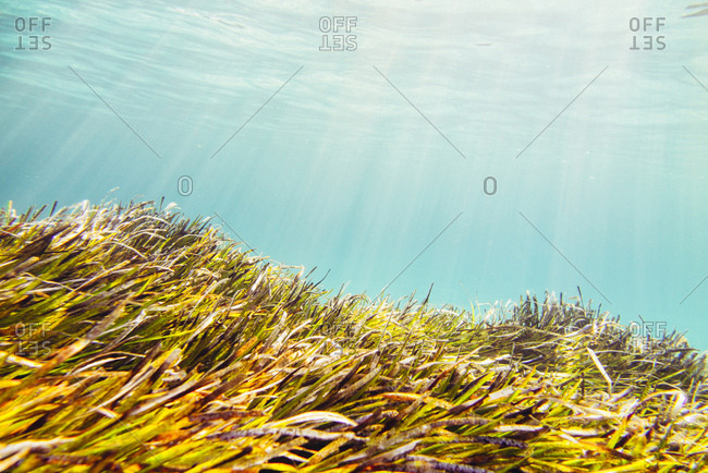 Underwater landscape around the mediterranean island formentera,