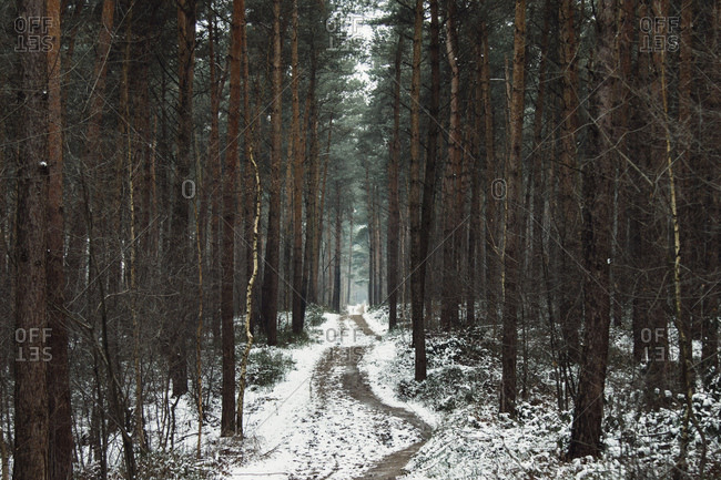 The teutoburg forest in the Munster region in winter,