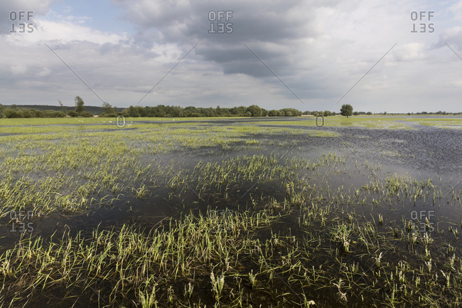 Poland, oderbruch, landscape at high water