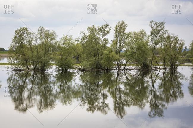 Poland, oderbruch, landscape at high water