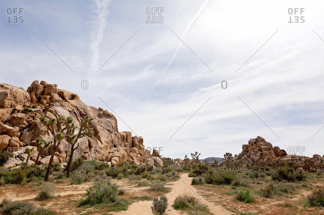 Rock formations and Joshua trees in desert setting