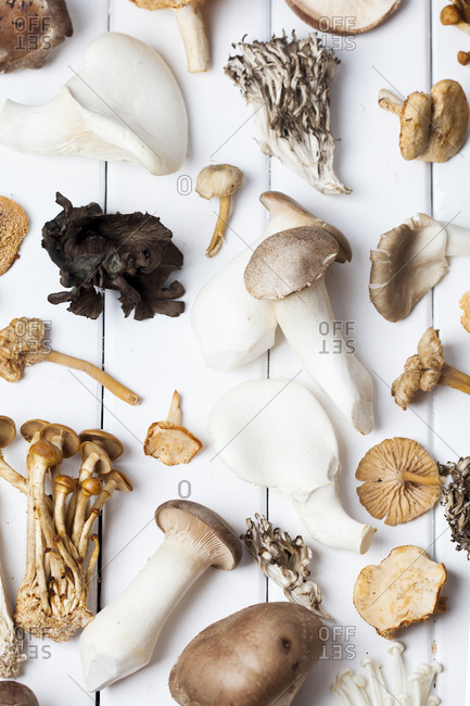 Variety of mushrooms on white surface