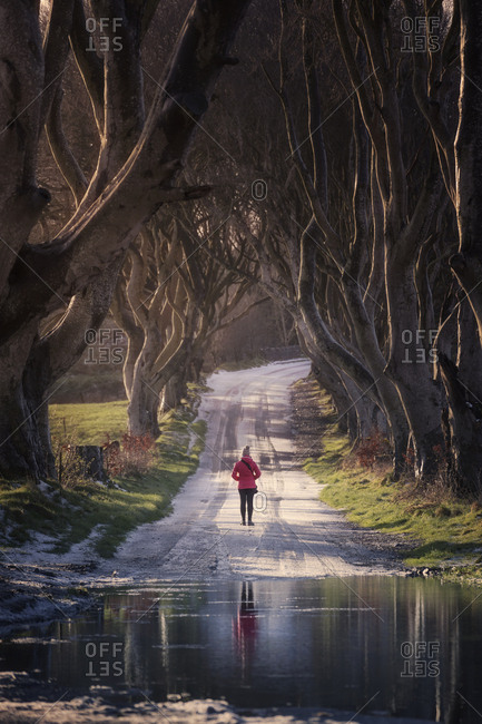 Back view of unrecognizable person in activewear standing on snowy road near puddle under mysterious beech trees with interlacing branches in Dark Hedges, Northern Ireland
