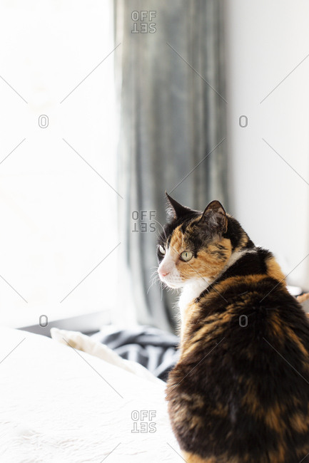 Calico cat posing near bright window at home