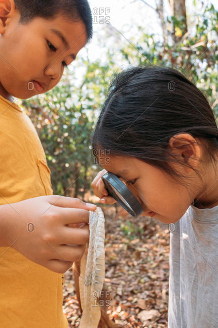 Brother and sister see the molt of a snake with a magnifying glass