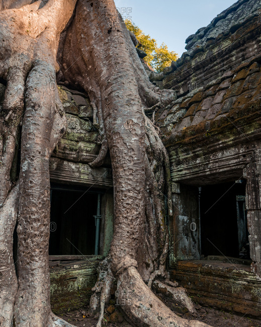Tree roots grown over temple