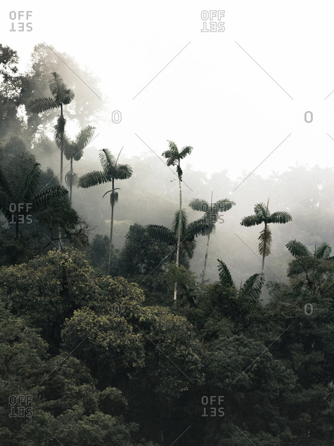 Mashpi cloud forest