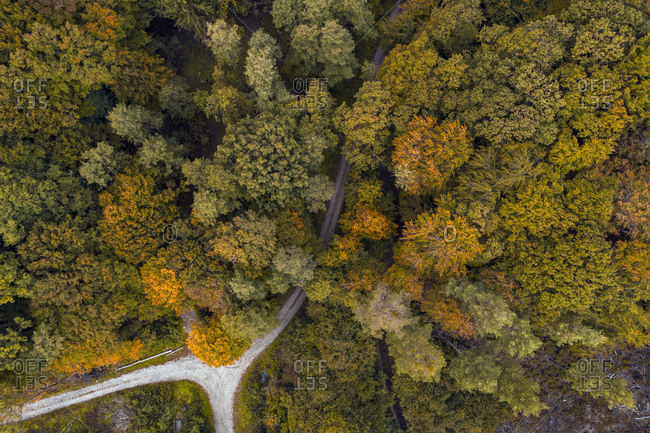Austria-Lower Austria- Aerial view of junction of gravel road in autumn forest