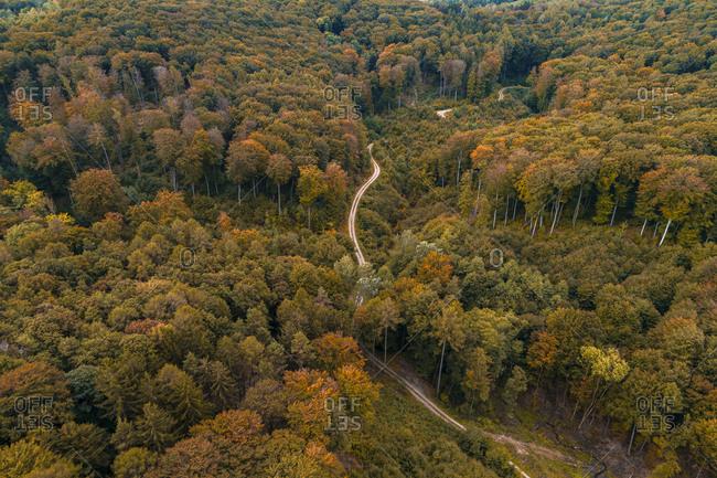 Austria-Lower Austria- Aerial view of winding gravel road through vast autumn forest