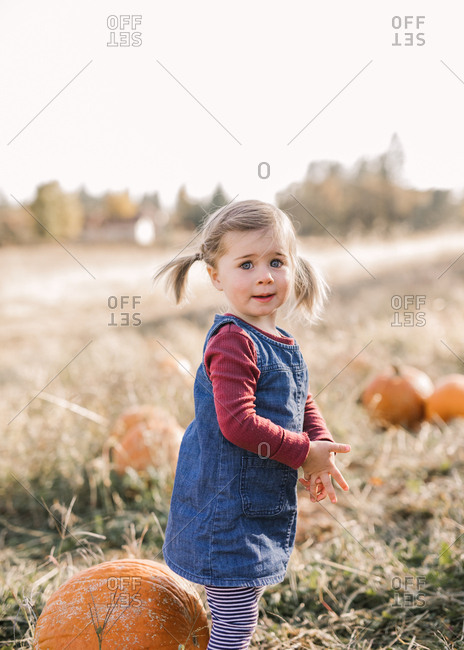 Toddler girl stands in a pumpkin patch