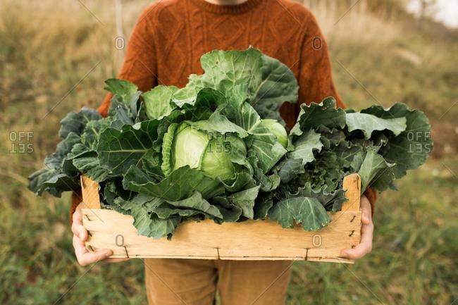 Man holding fresh picked green vegetables from garden