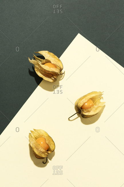 Composition with Physalis on green and cream yellow background