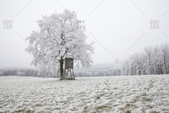 With hoarfrost covered meadow and trees in the outskirts of Vienna, a high seat next to the single tree, in the background the Vienna Wood in the fog, Austria,