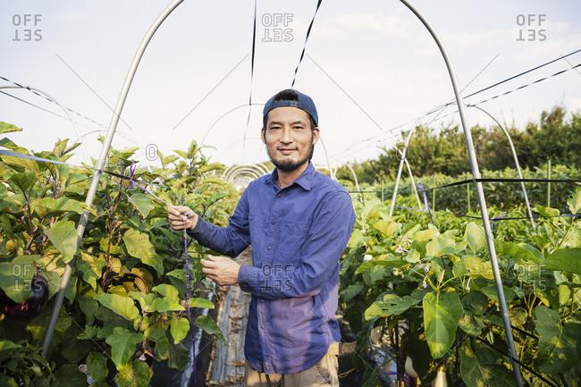 Smiling Japanese man wearing cap standing in vegetable field, looking at camera.