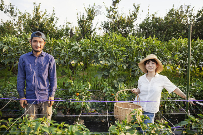 Japanese man wearing cap and woman wearing hat standing in vegetable field, smiling at camera.