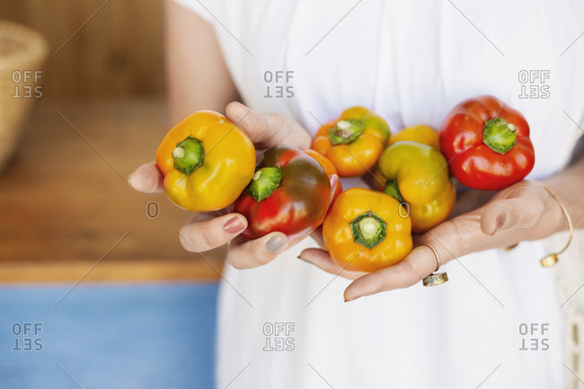 Close up of person holding freshly picked red and yellow peppers.