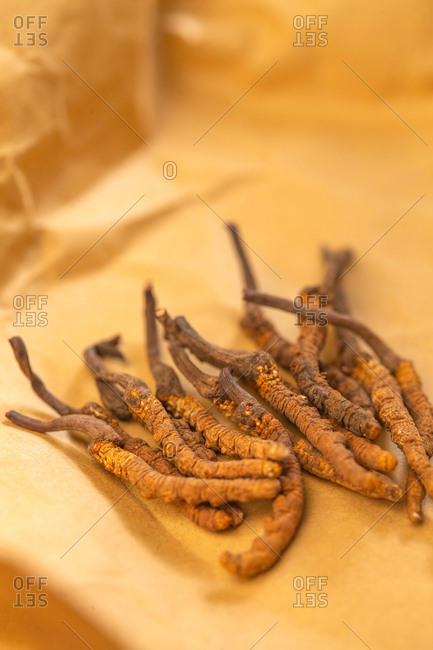 Close up of cordyceps sinensis