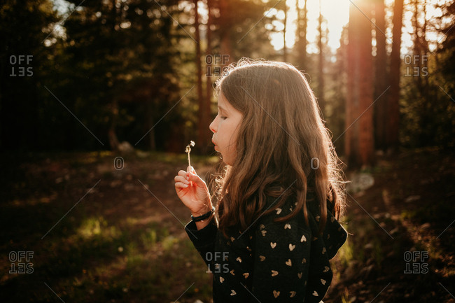 Close up of girl blowing dandelions