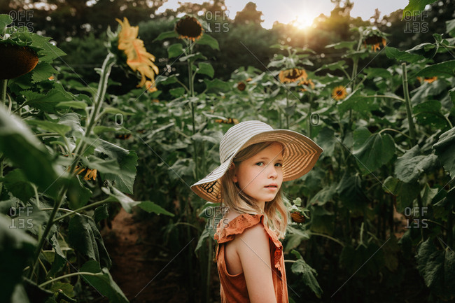Young girl walking in a sunflower field