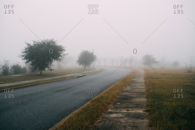 Dense fog over a winding street and trees