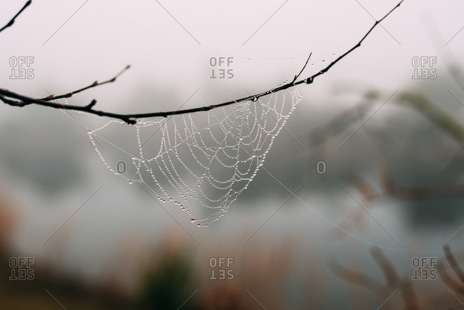 Dew on spiderweb hanging from a branch