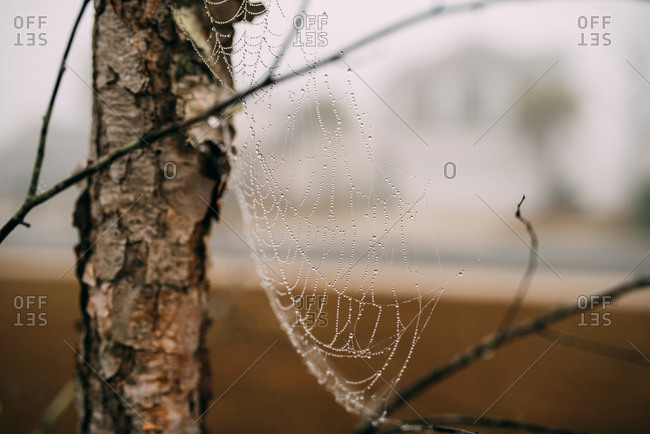 Spiderweb covered in dew on a branch in early morning