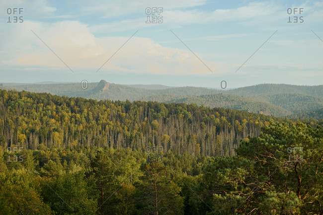Beautiful nature view of wild forest