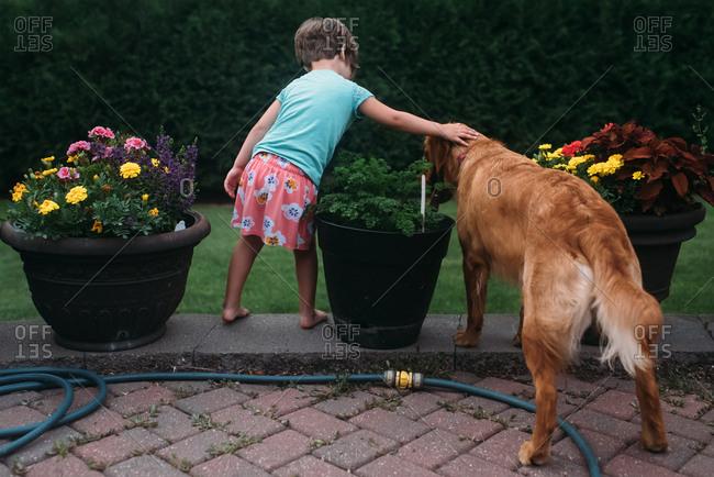 Little girl and a golden retriever in a backyard