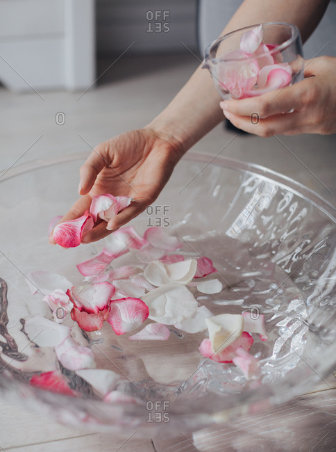 Hand of unrecognizable woman holding rose petals for spa bath.