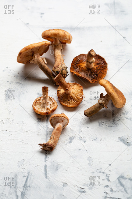 Mushrooms on a light textured background