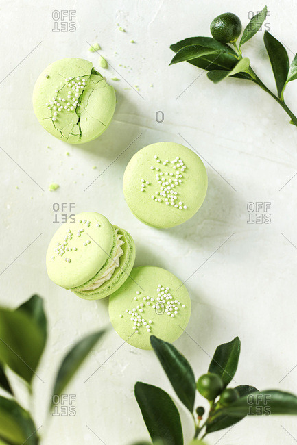 Overhead image of 4 lime macarons surrounded by baby limes and lime branches.