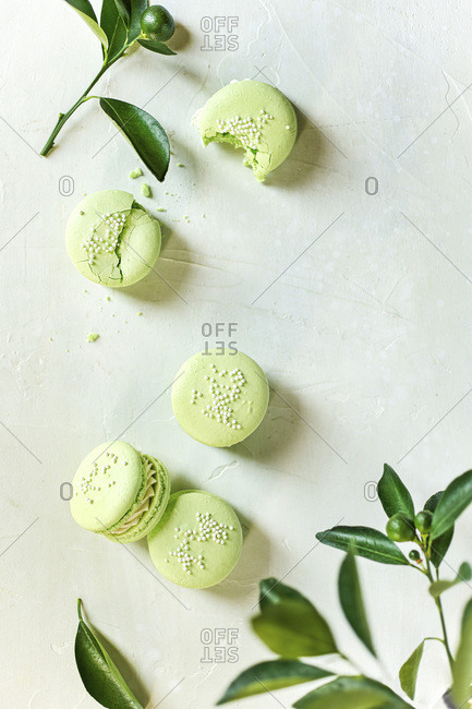 Overhead image of 5 lime macarons surrounded by baby limes and lime branches.