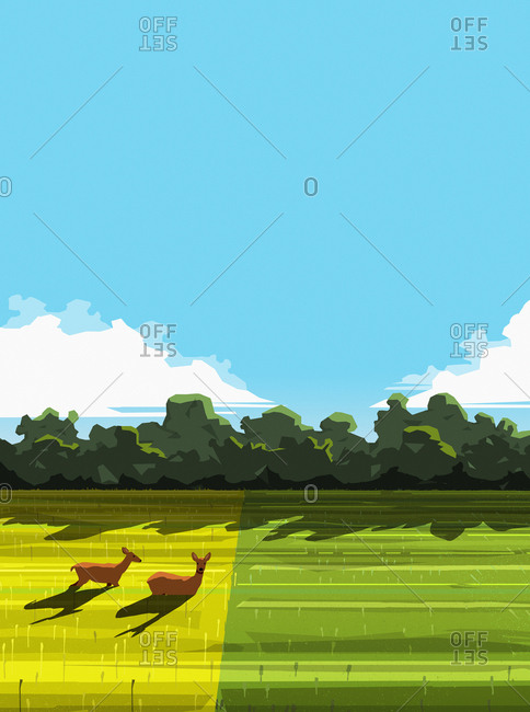 Deer relaxing in sunny rural field