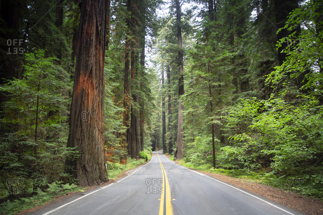 Redwood forest lined road in California, USA