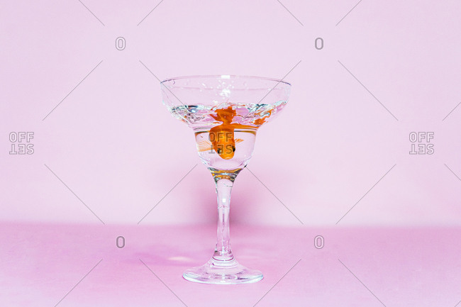 Goldfish swimming in a coupe glass