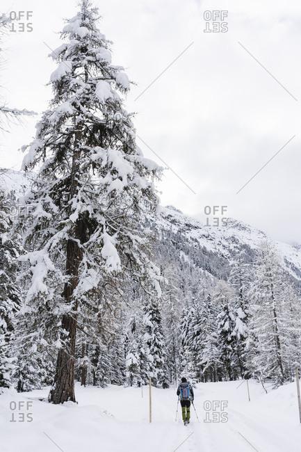 Hiker walking in a snowy forest- Engadin- Switzerland