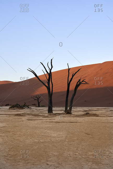 Dead trees and dunes in Deadvlei- Sossusvlei- Namib desert- Namibia