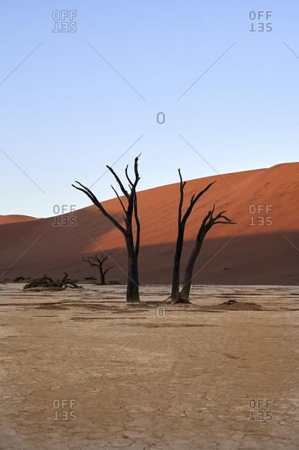 Dead trees and dunes in Deadvlei- Sossusvlei- Namib desert- Namibia