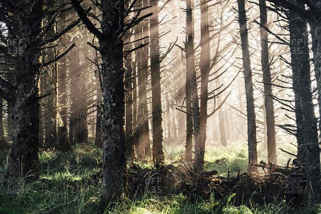 Sunbeams shining through forest in rural Oregon, USA