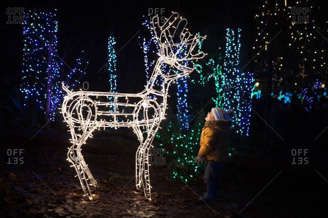 Toddler boy looking at illuminated Christmas reindeer decoration