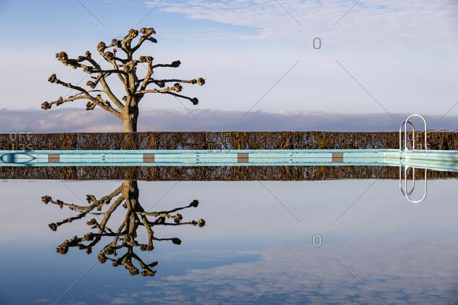 Tree reflecting in swimming pool