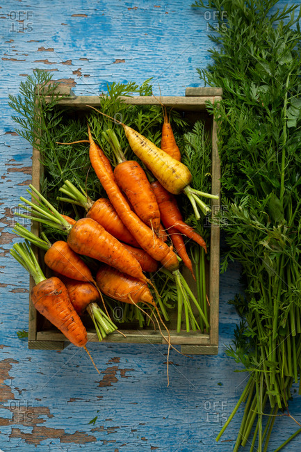 Orange carrots with green stem in crate top view