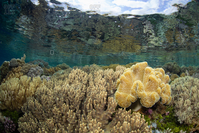 Scenic view of a coral reef in South East Sulawesi, Indonesia
