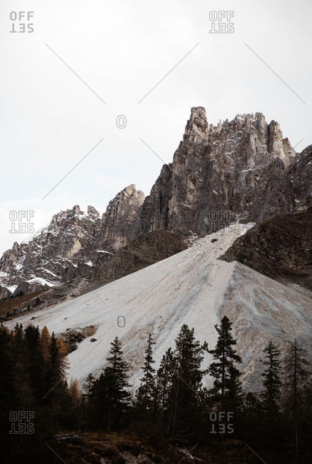 Pine forest with powerful big cliff and overcast sky on background at snowy Dolomites mountains in Italy