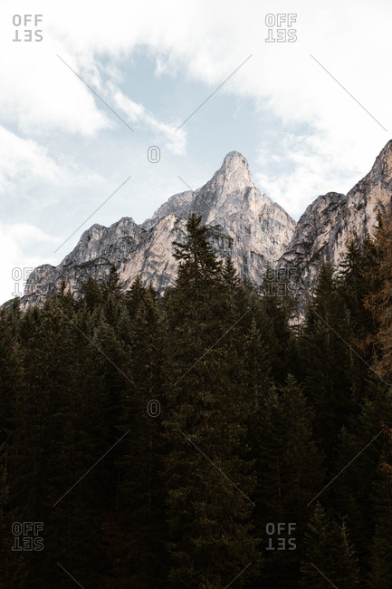 Pine forest with powerful big cliff and overcast sky on background at Dolomites mountains covered in snow in Italy