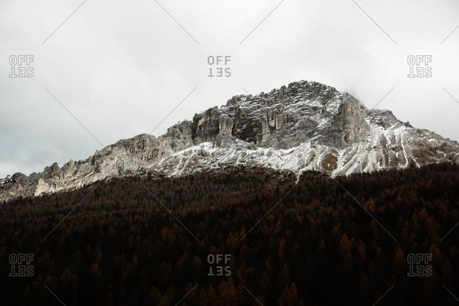 Pine forest with powerful big cliff and overcast sky on background at Dolomites mountains at Italy