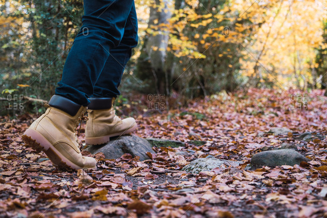 Crop legs in jeans and brown boots of hiker on rocky spangled of golden fallen leaves path with autumn forest on background