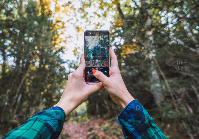 From below of crop hands in plaid shirt taking photo of autumn trees on mobile phone with woods on blurred background