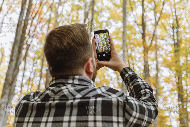Back view of man in plaid shirt taking photo of autumn trees on mobile phone with woods on blurred background