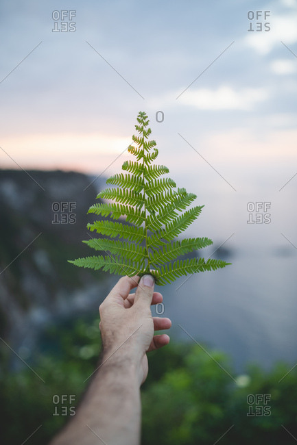 Crop anonymous man keeping green fern frond on background of Asturias, Spain landscape in evening